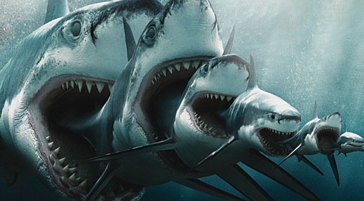 sharks eat sharks